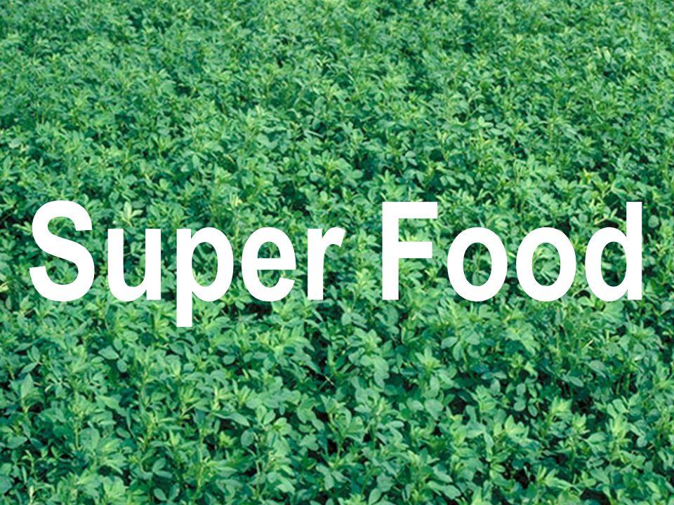 Top TEN Benefits of Alfalfa