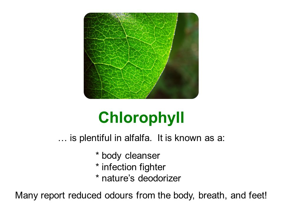 Chlorophyll … is plentiful in alfalfa.
