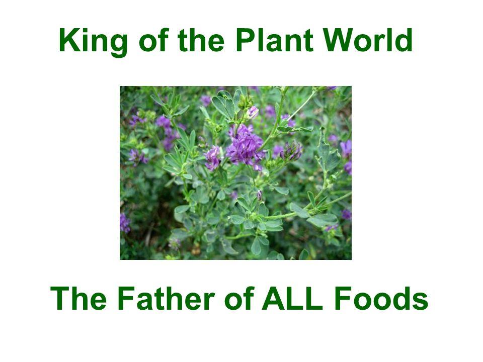 5 tablets = 1 teaspoon Alfalfa Leaf Powder 15 tablets = 1 tablespoon Alfalfa Leaf Powder Use Alfalfa Generously