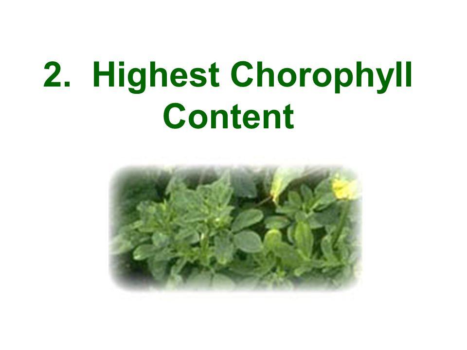 2. Highest Chorophyll Content