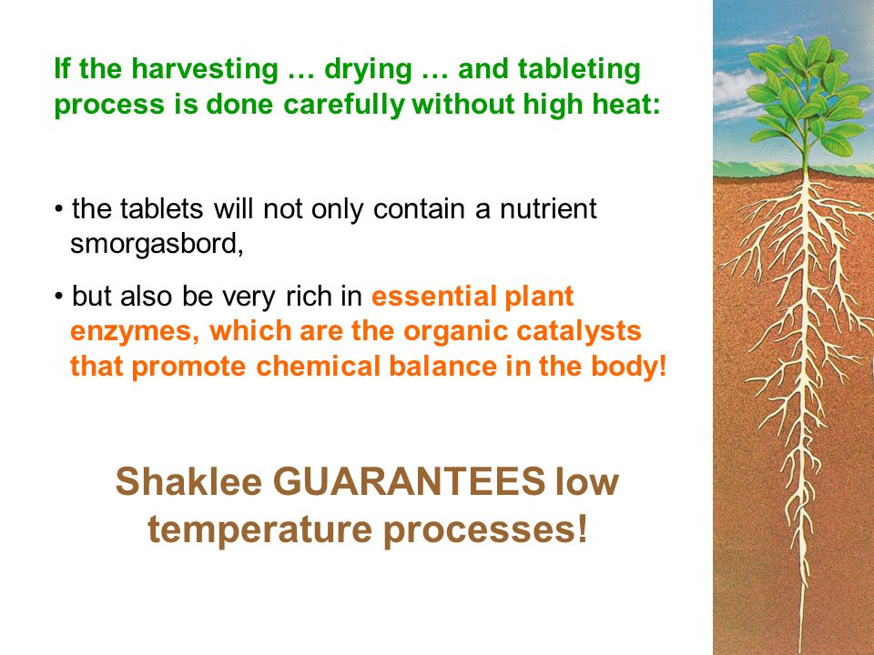 If the harvesting … drying … and tableting process is done carefully without high heat: the tablets will not only contain a nutrient smorgasbord, but also be very rich in essential plant enzymes, which are the organic catalysts that promote chemical balance in the body.