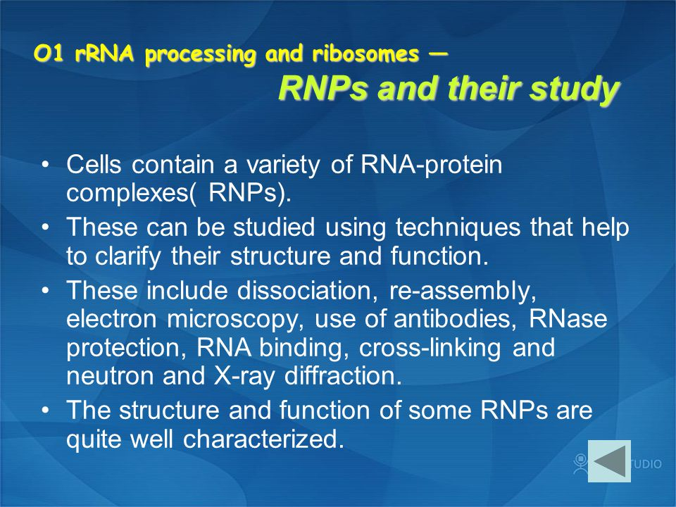 O1 rRNA processing and ribosomes — RNPs and their study Cells contain a variety of RNA-protein complexes( RNPs). These can be studied using techniques