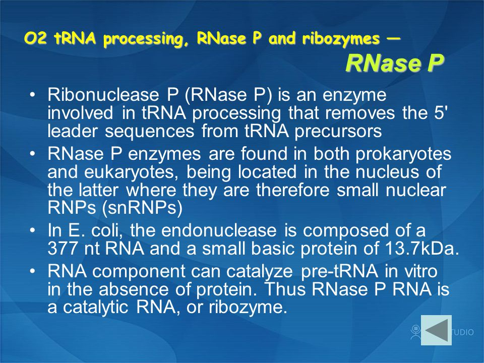 O2 tRNA processing, RNase P and ribozymes — RNase P Ribonuclease P (RNase P) is an enzyme involved in tRNA processing that removes the 5' leader seque