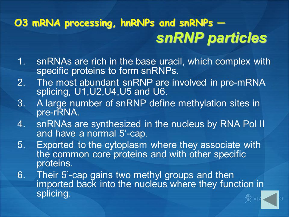 O3 mRNA processing, hnRNPs and snRNPs — snRNP particles 1.snRNAs are rich in the base uracil, which complex with specific proteins to form snRNPs. 2.T