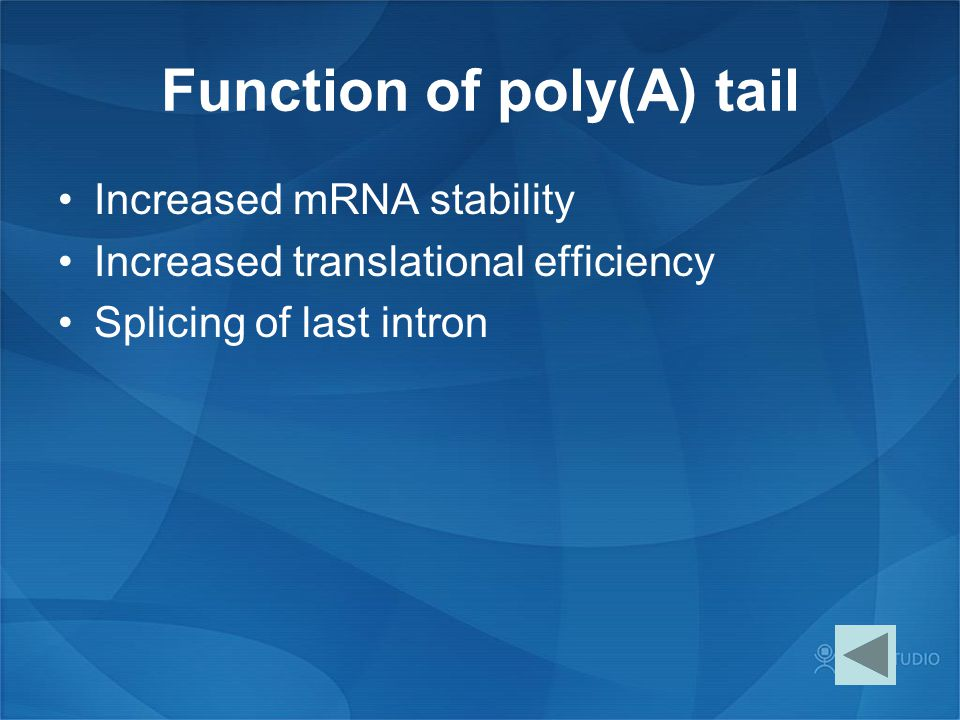 Function of poly(A) tail Increased mRNA stability Increased translational efficiency Splicing of last intron