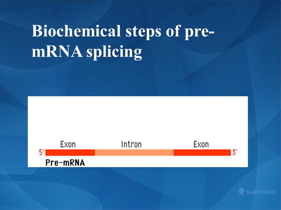 Biochemical steps of pre- mRNA splicing