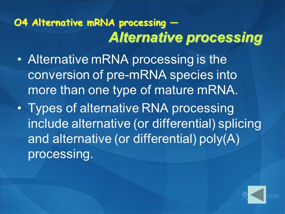 O4 Alternative mRNA processing — Alternative processing Alternative mRNA processing is the conversion of pre-mRNA species into more than one type of m