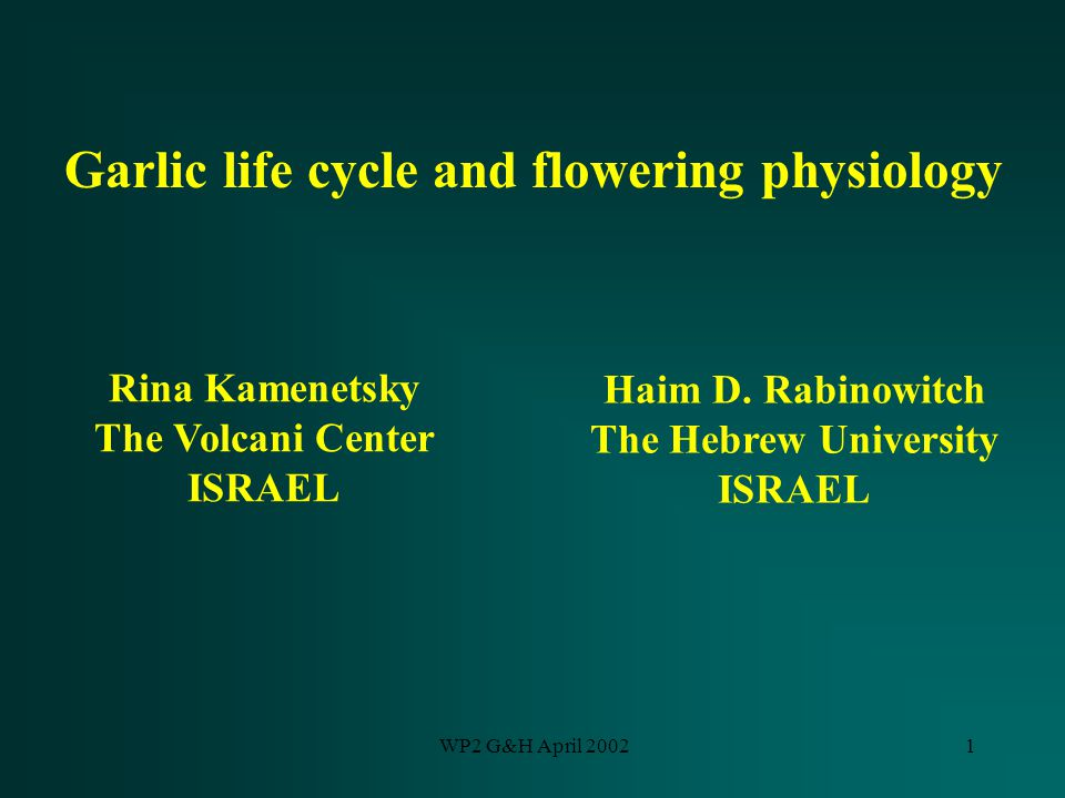 WP2 G&H April 20021 Garlic life cycle and flowering physiology Rina Kamenetsky The Volcani Center ISRAEL Haim D. Rabinowitch The Hebrew University ISR