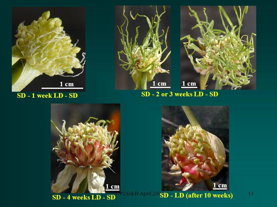 WP2 G&H April 200213 SD - 2 or 3 weeks LD - SD 1 cm SD - 4 weeks LD - SD SD - LD (after 10 weeks) 1 cm SD - 1 week LD - SD 1 cm