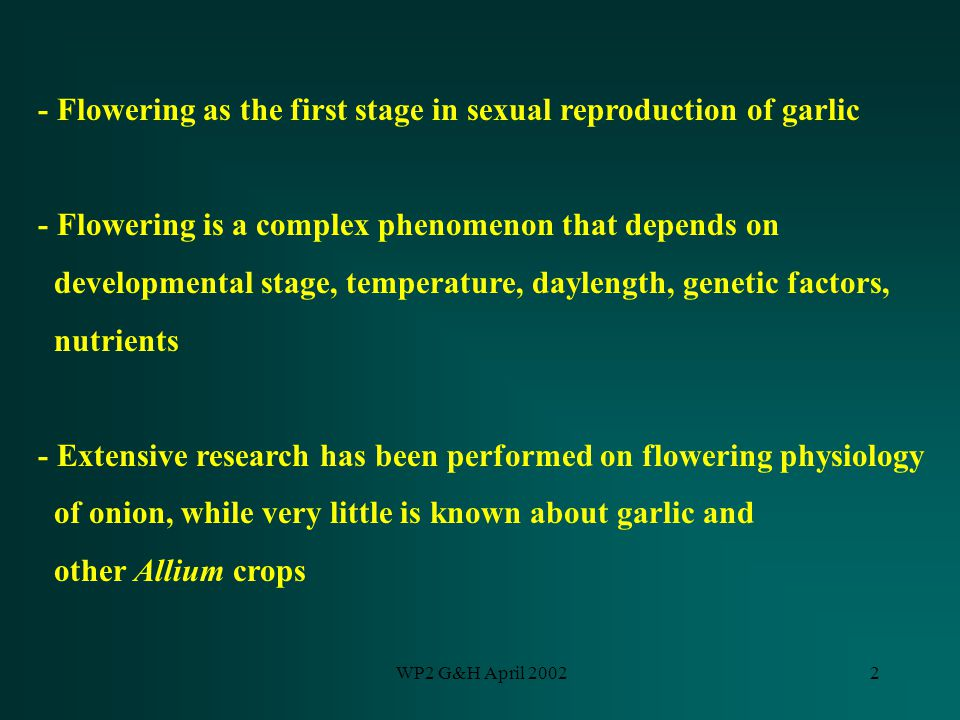 WP2 G&H April 20022 - Flowering as the first stage in sexual reproduction of garlic - Flowering is a complex phenomenon that depends on developmental