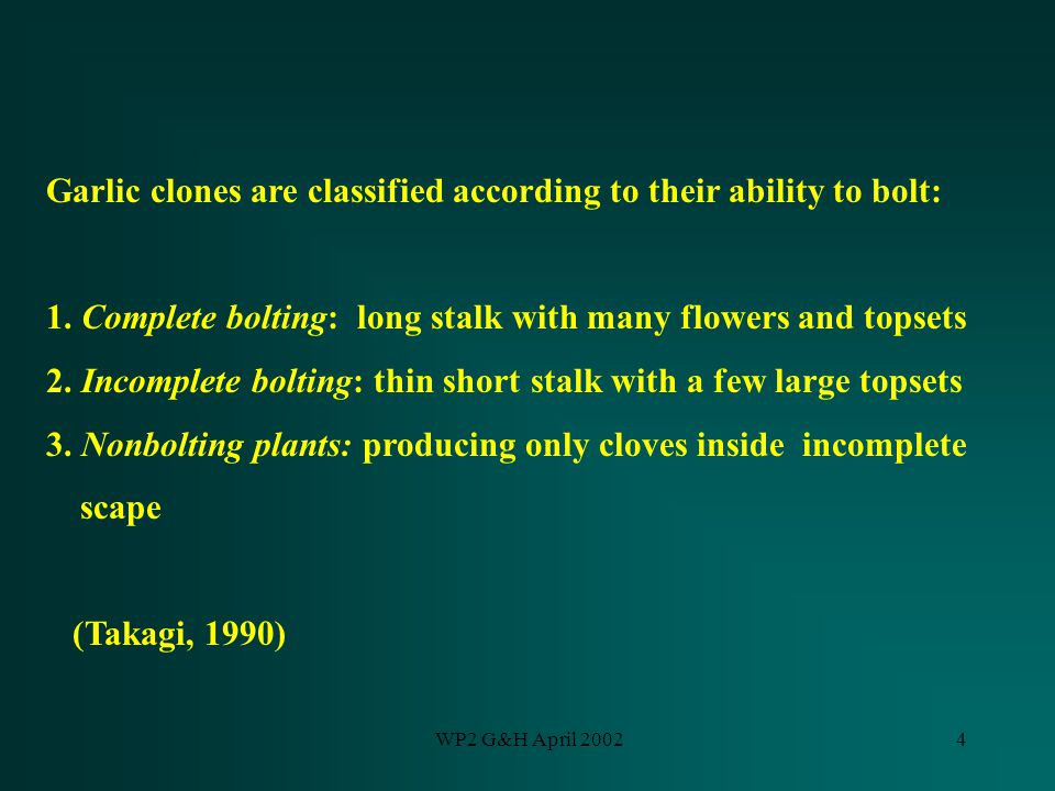 WP2 G&H April 20024 Garlic clones are classified according to their ability to bolt: 1. Complete bolting: long stalk with many flowers and topsets 2.