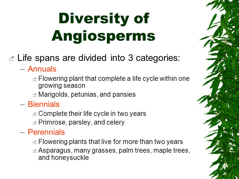 Diversity of Angiosperms  Life spans are divided into 3 categories: –Annuals  Flowering plant that complete a life cycle within one growing season 