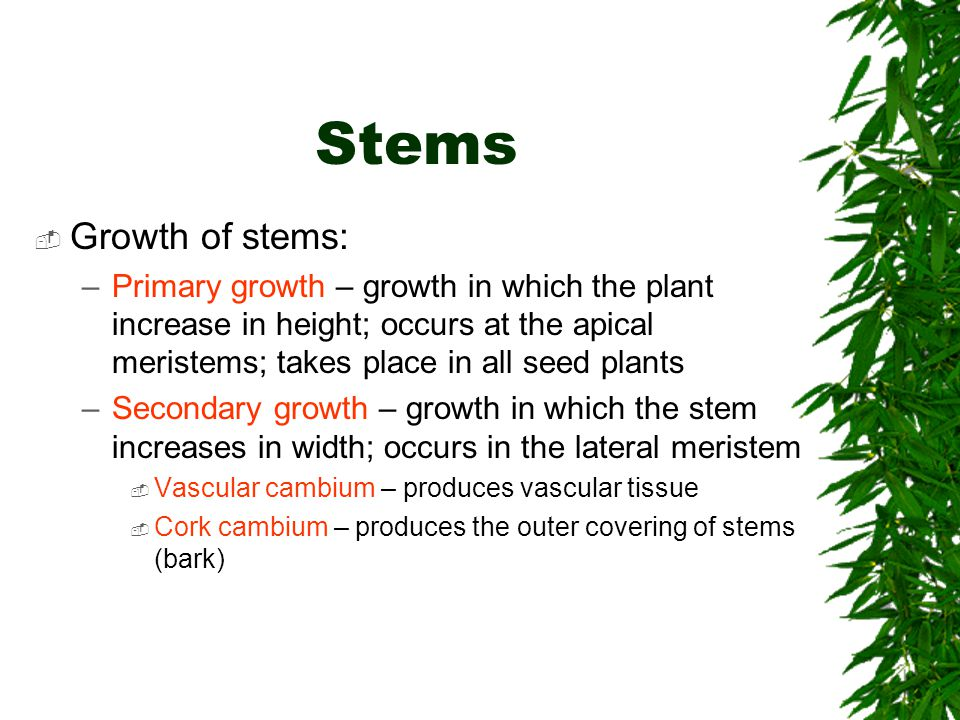 Stems  Growth of stems: –Primary growth – growth in which the plant increase in height; occurs at the apical meristems; takes place in all seed plant
