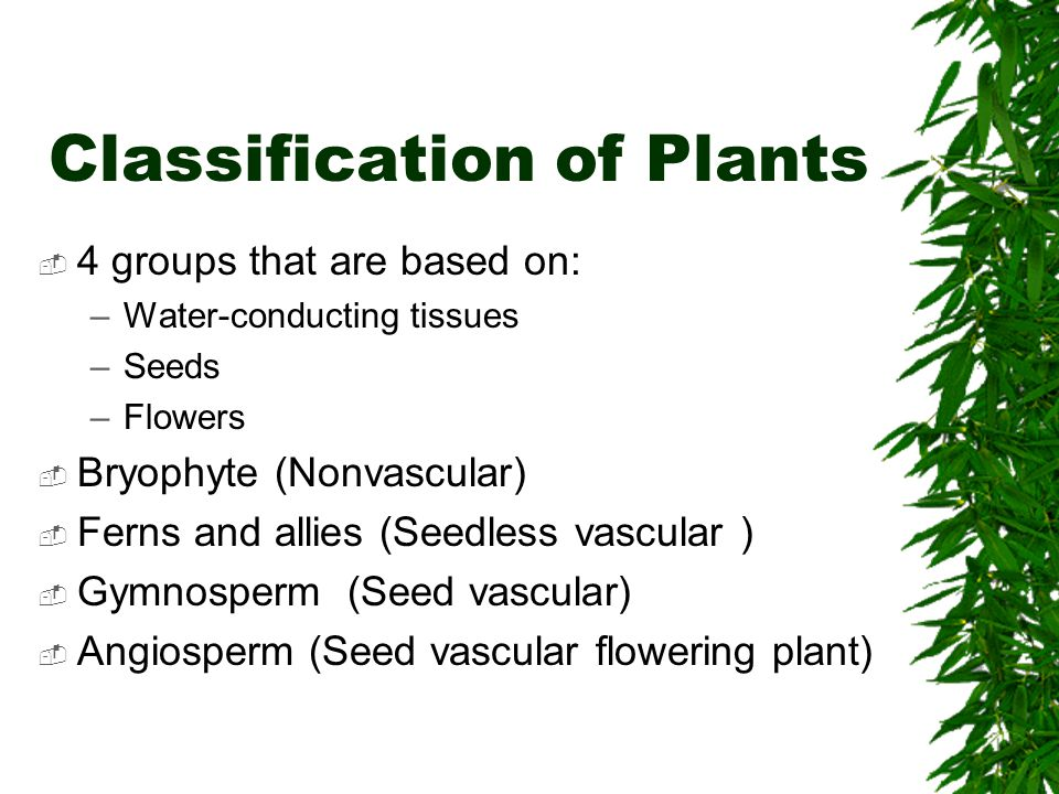 Classification of Plants  4 groups that are based on: –Water-conducting tissues –Seeds –Flowers  Bryophyte (Nonvascular)  Ferns and allies (Seedles