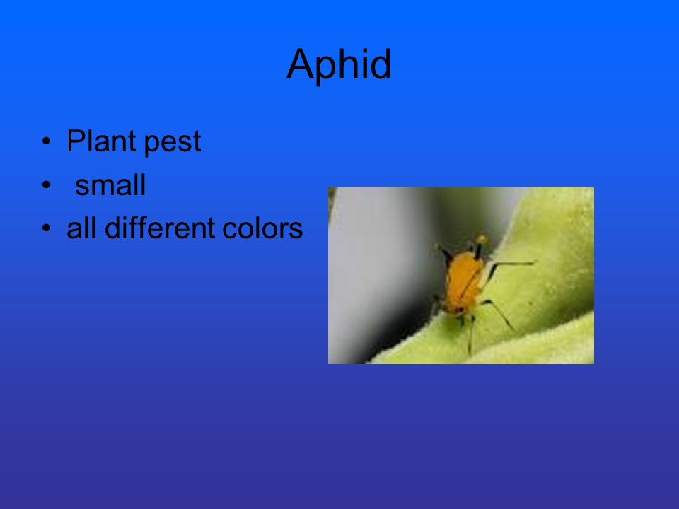 Aphid Plant pest small all different colors