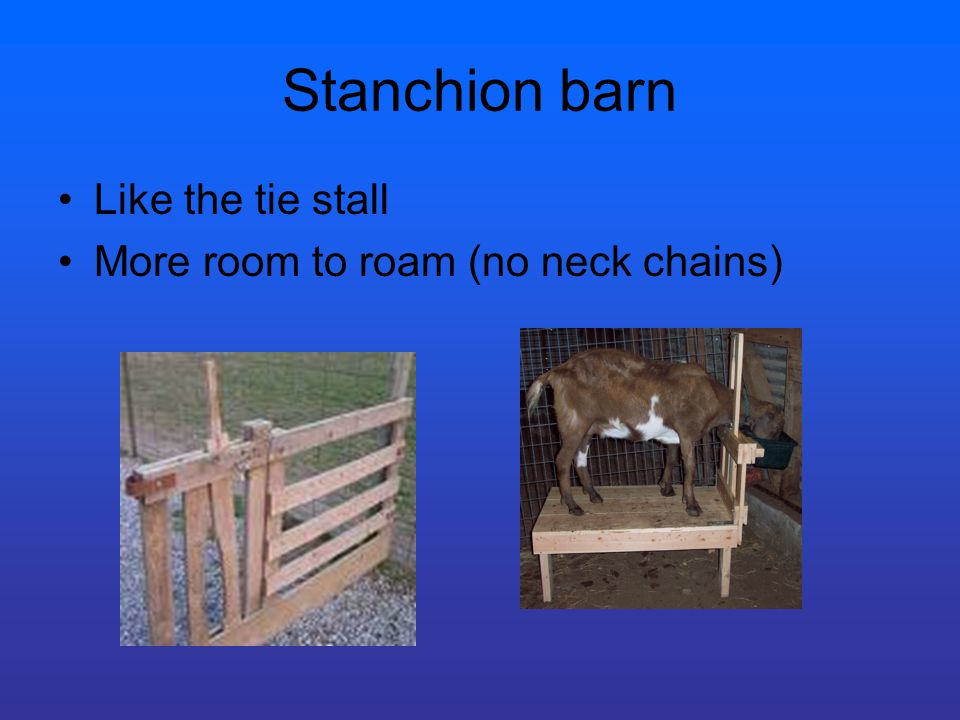 Stanchion barn Like the tie stall More room to roam (no neck chains)