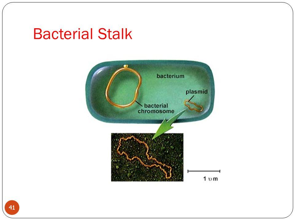 Bacterial Stalk 41