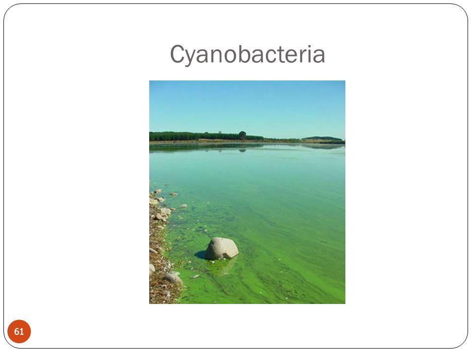 Cyanobacteria 61