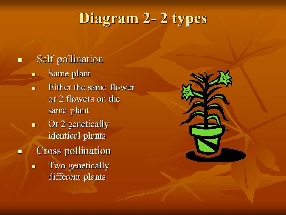 Diagram 2- 2 types Self pollination Self pollination Same plant Same plant Either the same flower or 2 flowers on the same plant Either the same flowe