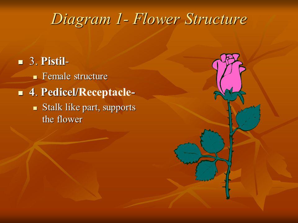 Diagram 1- Flower Structure 3. Pistil- 3. Pistil- Female structure Female structure 4. Pedicel/- 4. Pedicel/Receptacle- Stalk like part, supports the