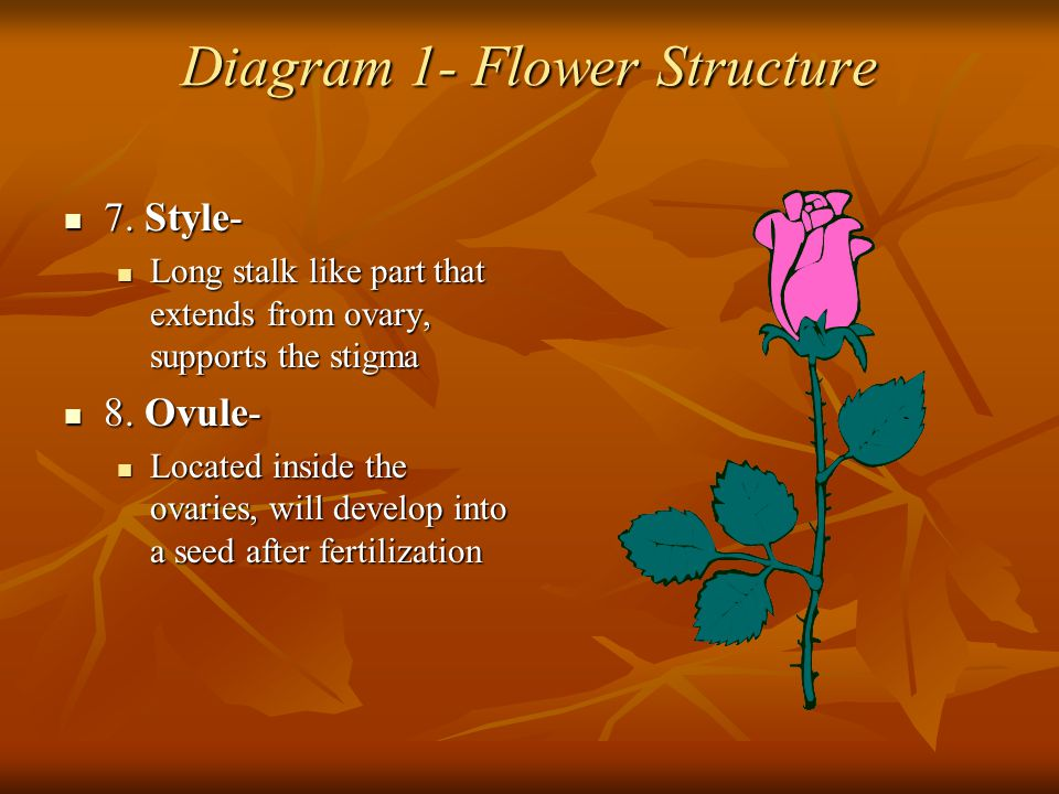 Diagram 1- Flower Structure 7. Style- 7. Style- Long stalk like part that extends from ovary, supports the stigma Long stalk like part that extends fr