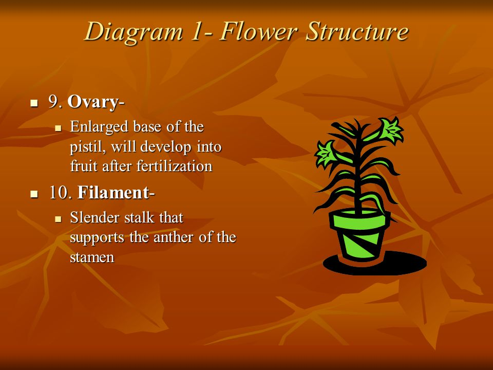 Diagram 1- Flower Structure 9. Ovary- 9. Ovary- Enlarged base of the pistil, will develop into fruit after fertilization Enlarged base of the pistil,