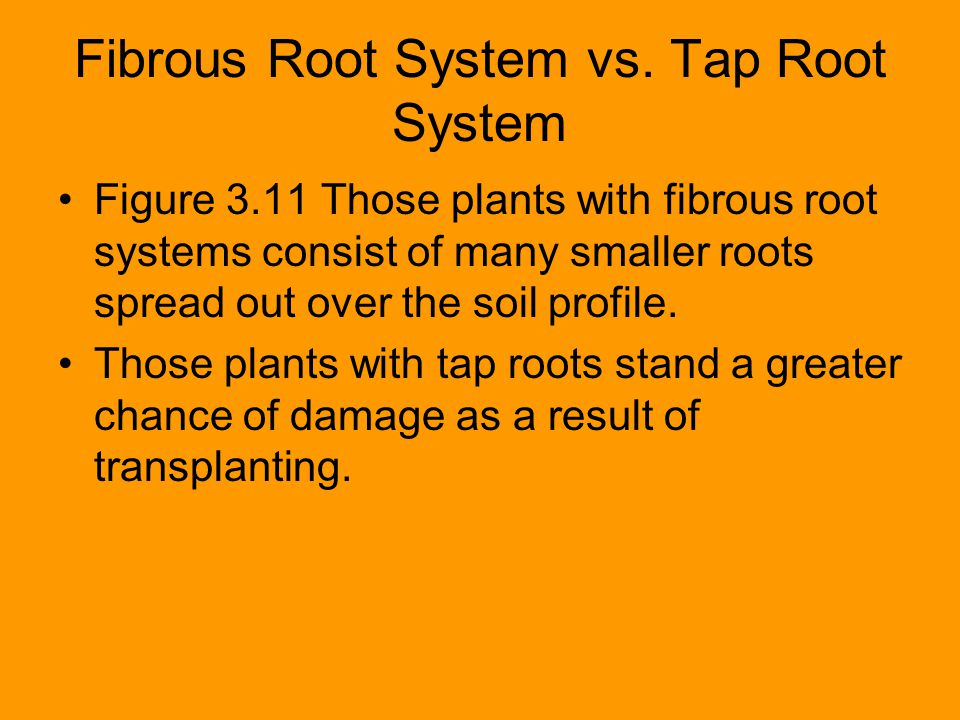 Fibrous Root System vs. Tap Root System Figure 3.11 Those plants with fibrous root systems consist of many smaller roots spread out over the soil prof