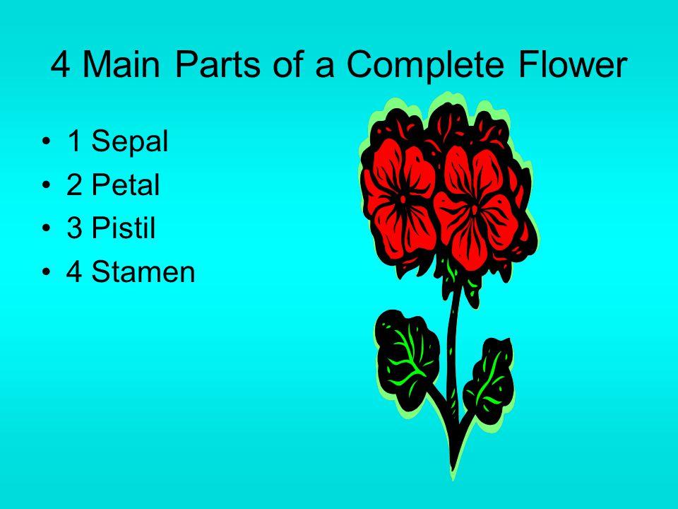 4 Main Parts of a Complete Flower 1 Sepal 2 Petal 3 Pistil 4 Stamen