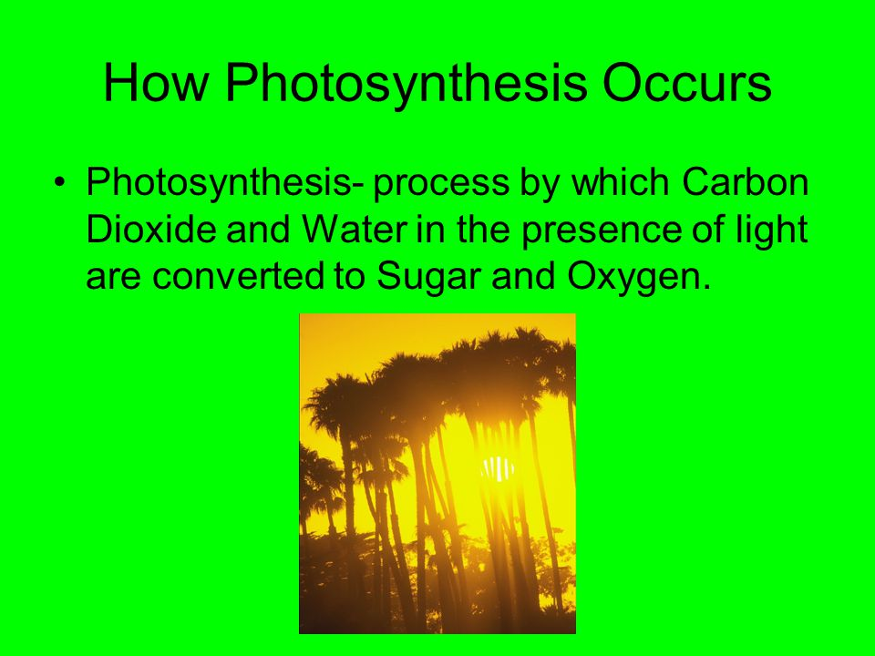 How Photosynthesis Occurs Photosynthesis- process by which Carbon Dioxide and Water in the presence of light are converted to Sugar and Oxygen.