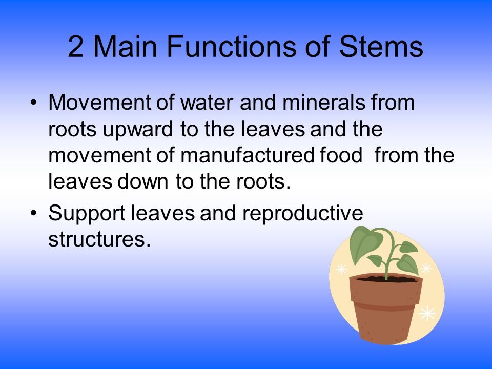 Other Plant Terms Xylem- transports water and nutrients from the roots to the stem and leaves.