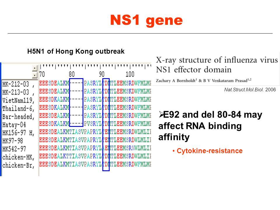 Nat.Struct.Mol.Biol. 2006  E92 and del 80-84 may affect RNA binding affinity Cytokine-resistance H5N1 of Hong Kong outbreak NS1 gene