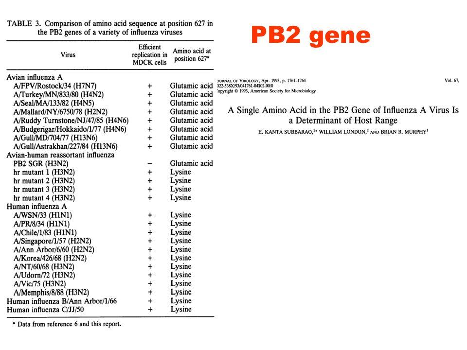 PB2 gene