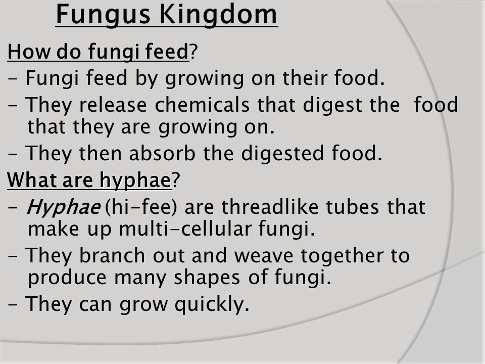 Fungus Kingdom How do fungi feed? - Fungi feed by growing on their food. - They release chemicals that digest the food that they are growing on. - The