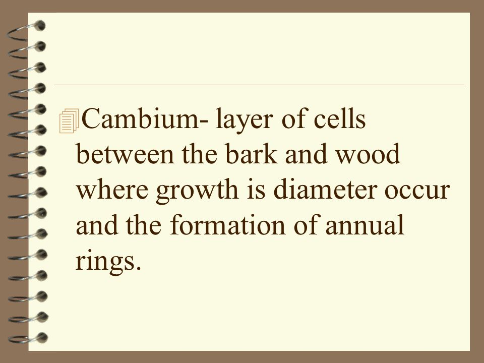 4 Cambium- layer of cells between the bark and wood where growth is diameter occur and the formation of annual rings.