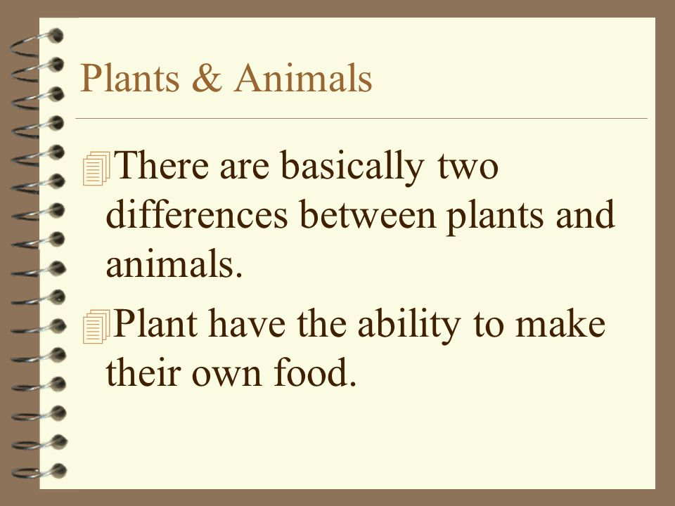 Plants & Animals 4 There are basically two differences between plants and animals. 4 Plant have the ability to make their own food.