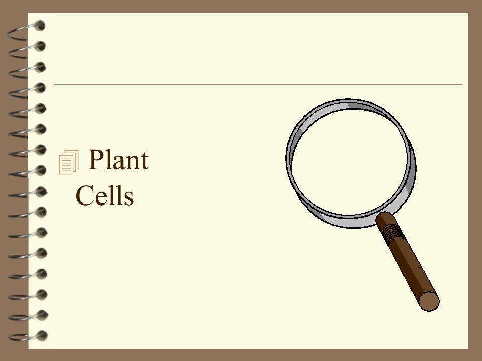 4 Plant Cells