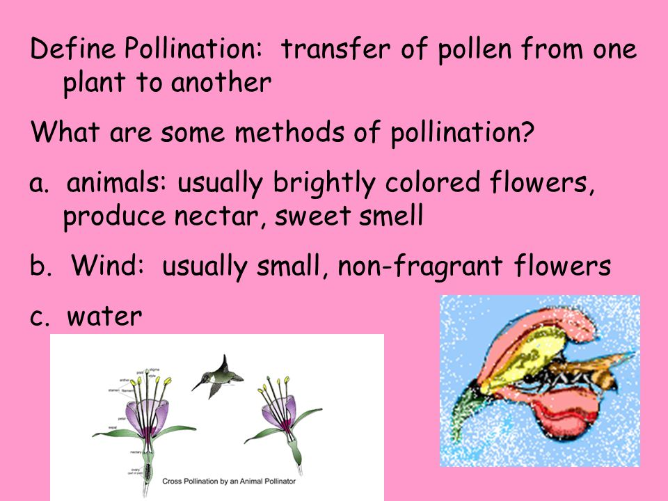 Define Pollination: transfer of pollen from one plant to another What are some methods of pollination.