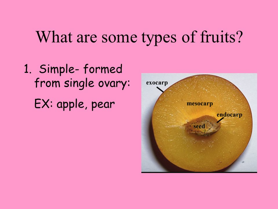 What are some types of fruits 1. Simple- formed from single ovary: EX: apple, pear