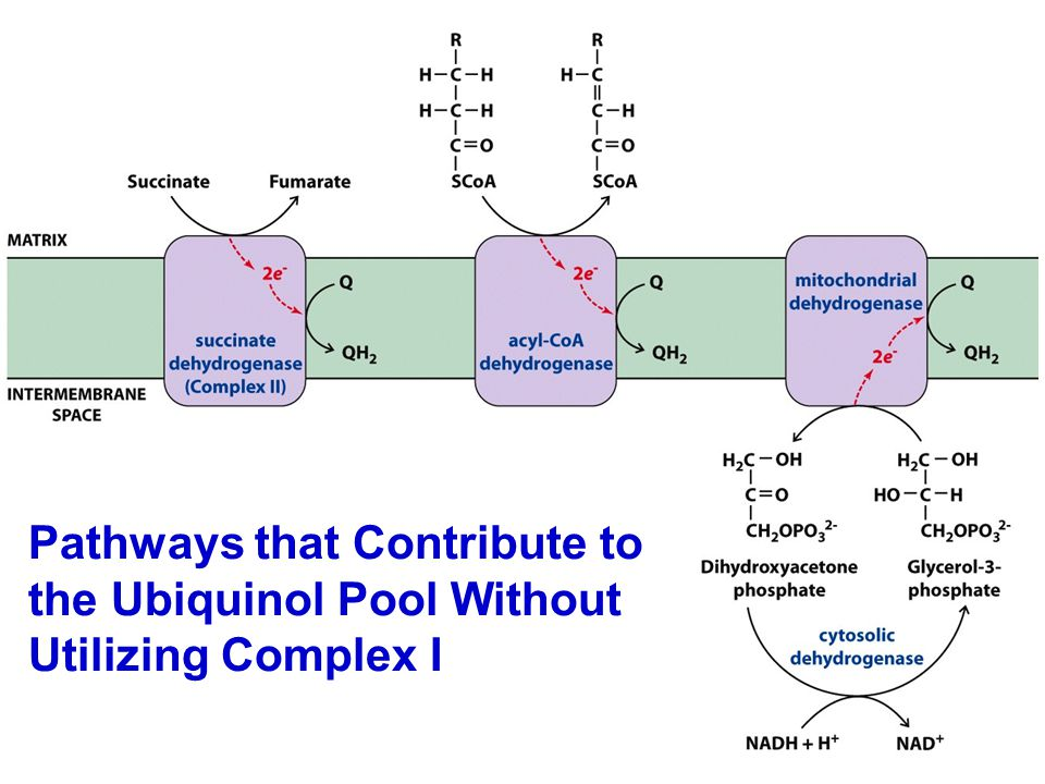 Pathways that Contribute to the Ubiquinol Pool Without Utilizing Complex I