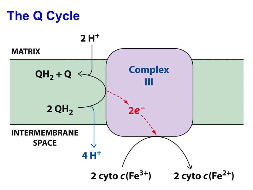 The Q Cycle