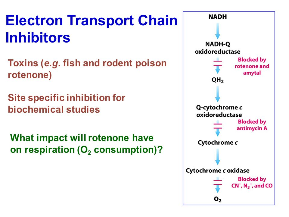 Electron Transport Chain Inhibitors Toxins (e.g.