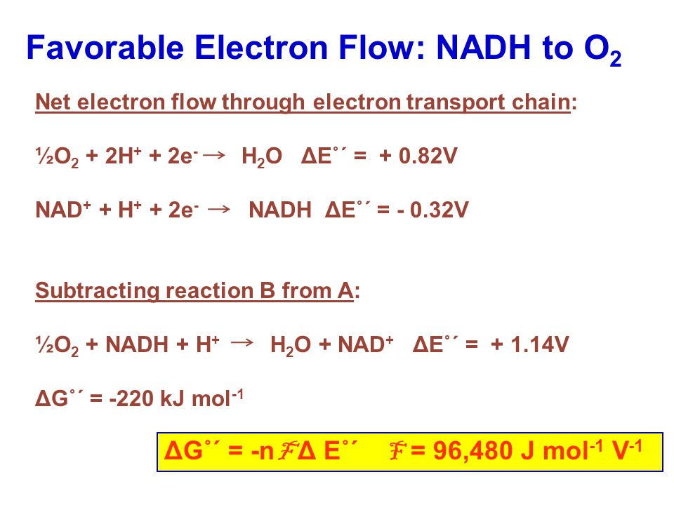 ΔG˚΄ = -n F Δ E˚΄ F = 96,480 J mol -1 V -1 Favorable Electron Flow: NADH to O 2 Net electron flow through electron transport chain: ½O 2 + 2H + + 2e - H 2 O ΔE˚΄ = + 0.82V NAD + + H + + 2e - NADH ΔE˚΄ = - 0.32V Subtracting reaction B from A: ½O 2 + NADH + H + H 2 O + NAD + ΔE˚΄ = + 1.14V ΔG˚΄ = -220 kJ mol -1