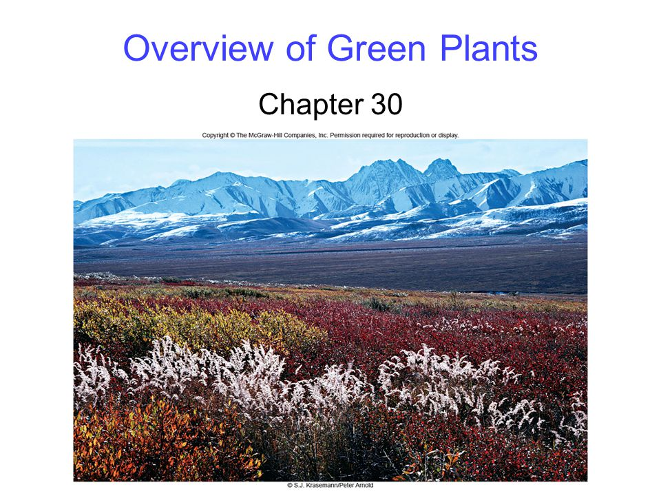 2 Defining Plants The kingdom Viridiplantae includes land plants and green algae -Red and brown algae are excluded All green plants arose from a single species of freshwater algae The green algae split into two major clades -Chlorophytes – Never made it to land -Charophytes – Did!