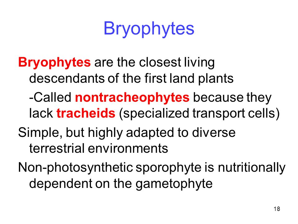 18 Bryophytes Bryophytes are the closest living descendants of the first land plants -Called nontracheophytes because they lack tracheids (specialized