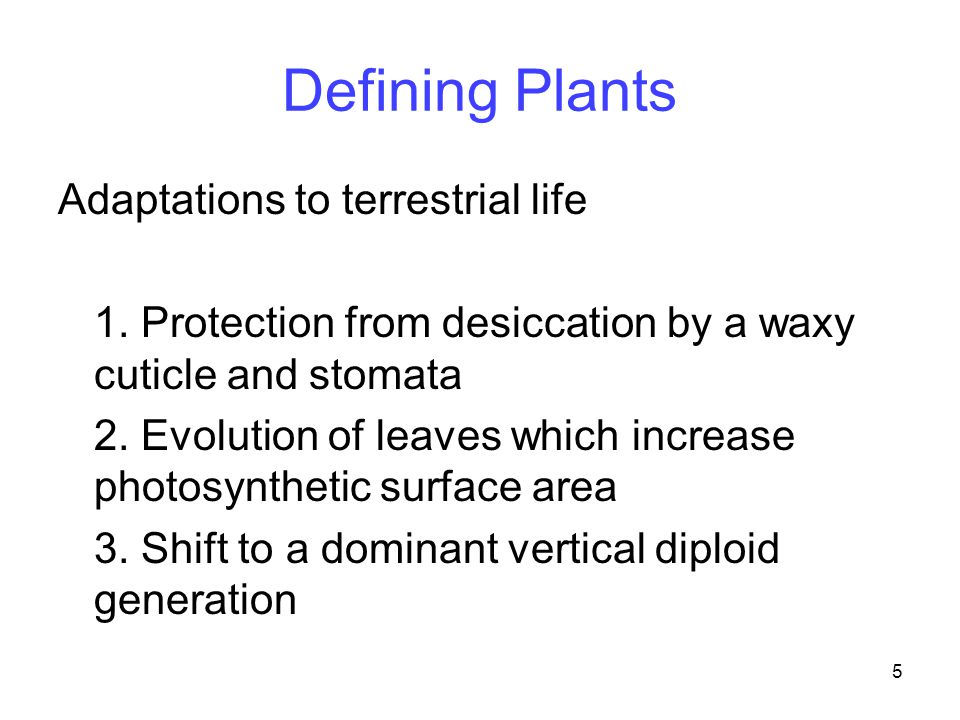 5 Defining Plants Adaptations to terrestrial life 1. Protection from desiccation by a waxy cuticle and stomata 2. Evolution of leaves which increase p
