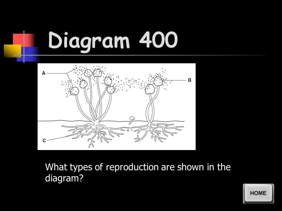 Diagram 300 What does Part C of the diagram show