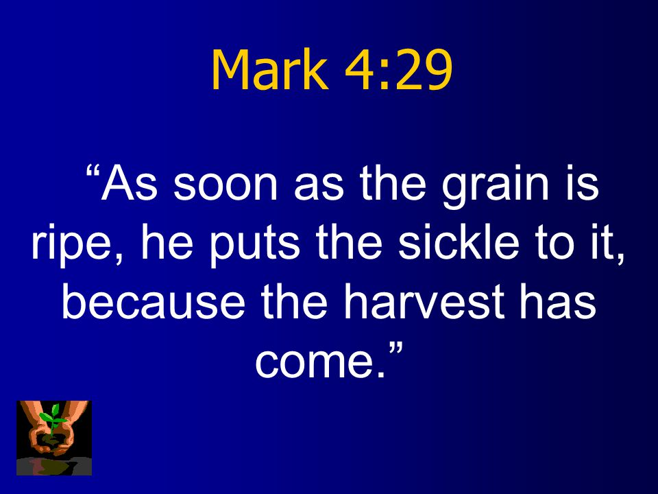 Mark 4:28 All by itself the soil produces grain--first the stalk, then the head, then the full kernel in the head.