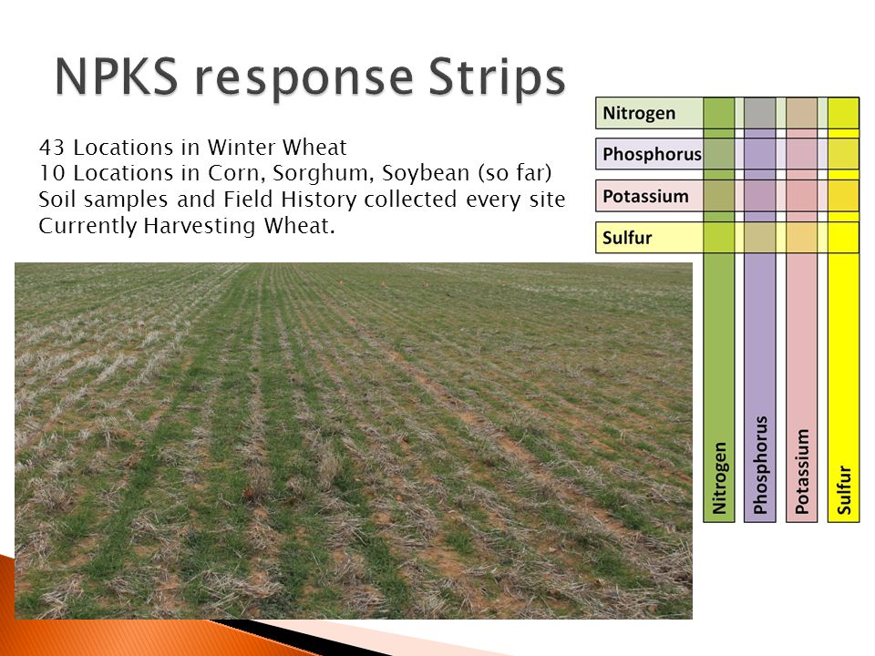 43 Locations in Winter Wheat 10 Locations in Corn, Sorghum, Soybean (so far) Soil samples and Field History collected every site Currently Harvesting Wheat.