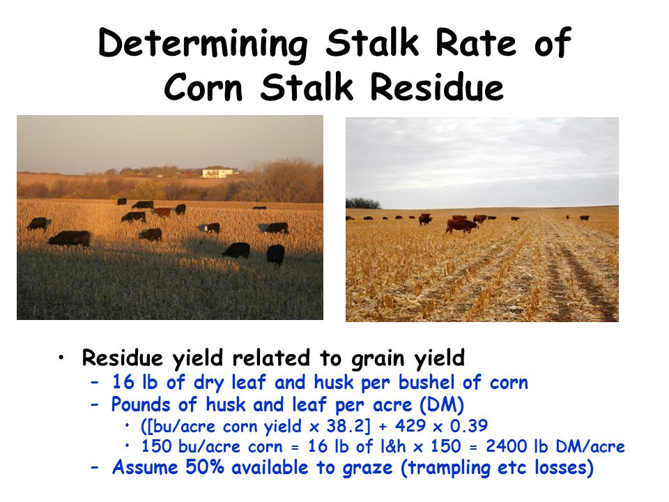 Determining Stalk Rate of Corn Stalk Residue Residue yield related to grain yield –16 lb of dry leaf and husk per bushel of corn –Pounds of husk and l