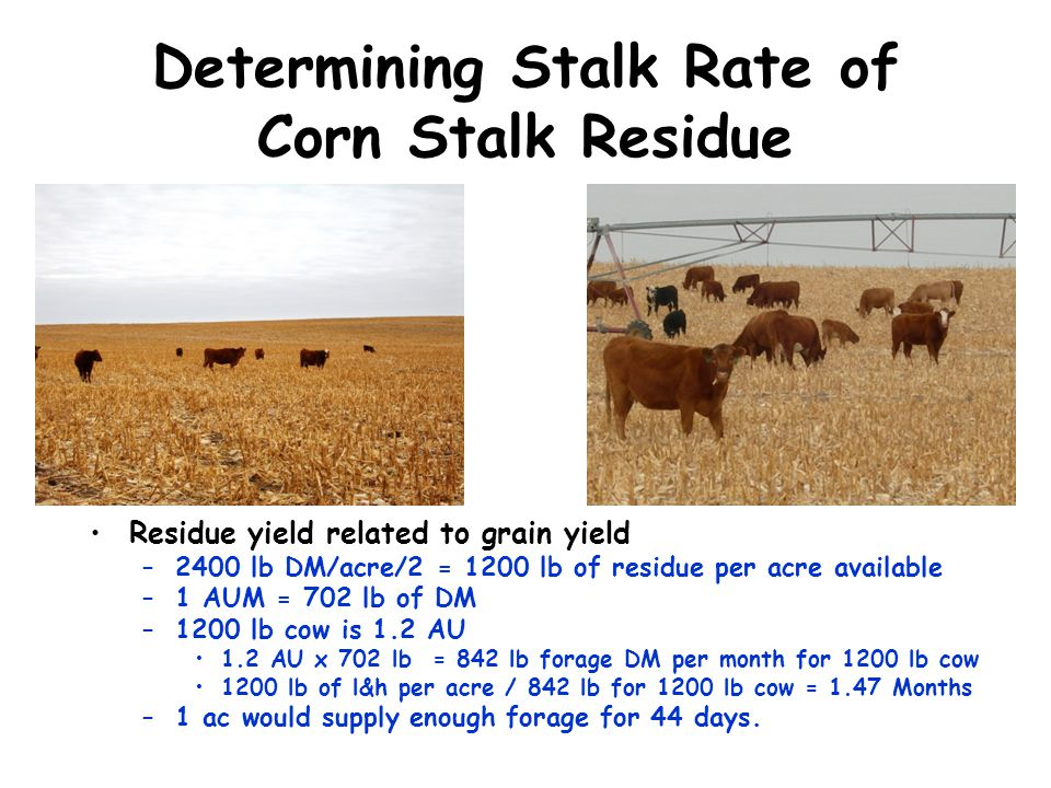 Determining Stalk Rate of Corn Stalk Residue Residue yield related to grain yield –2400 lb DM/acre/2 = 1200 lb of residue per acre available –1 AUM =